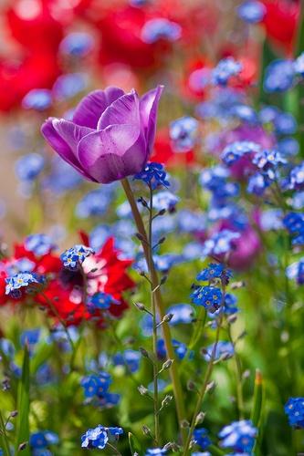 Field of Flowers ... Simply Fresh Vintage