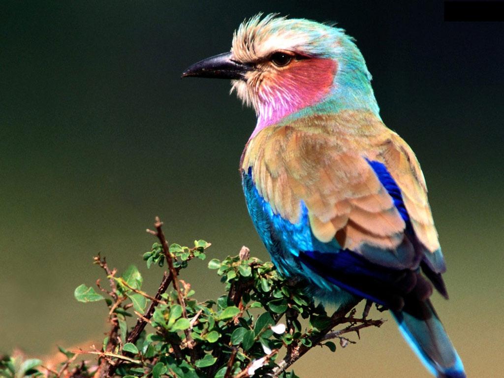 Beautiful Bird ... Simply Fresh Vintage