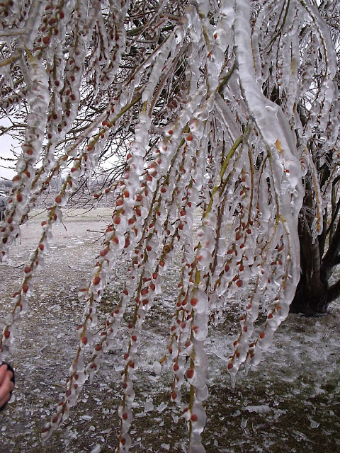 Ice Storm @ Sew Fresh Quilts