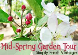 Mid-Spring In the Garden …