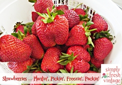 Strawberries – Growin' & Pickin'