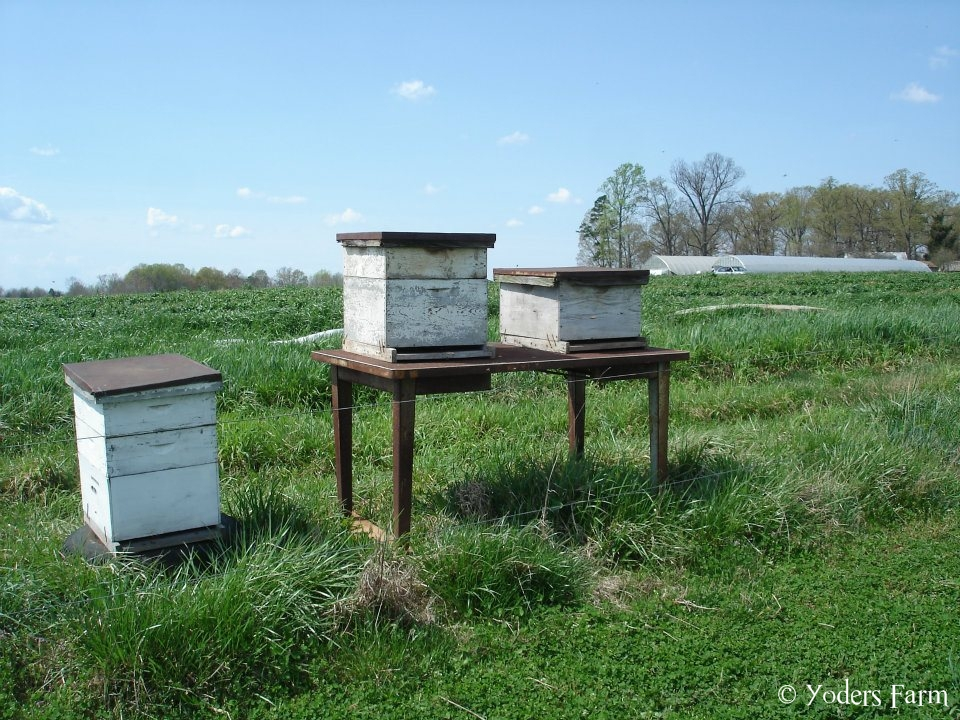 Bee Hives @ Yoders Farm