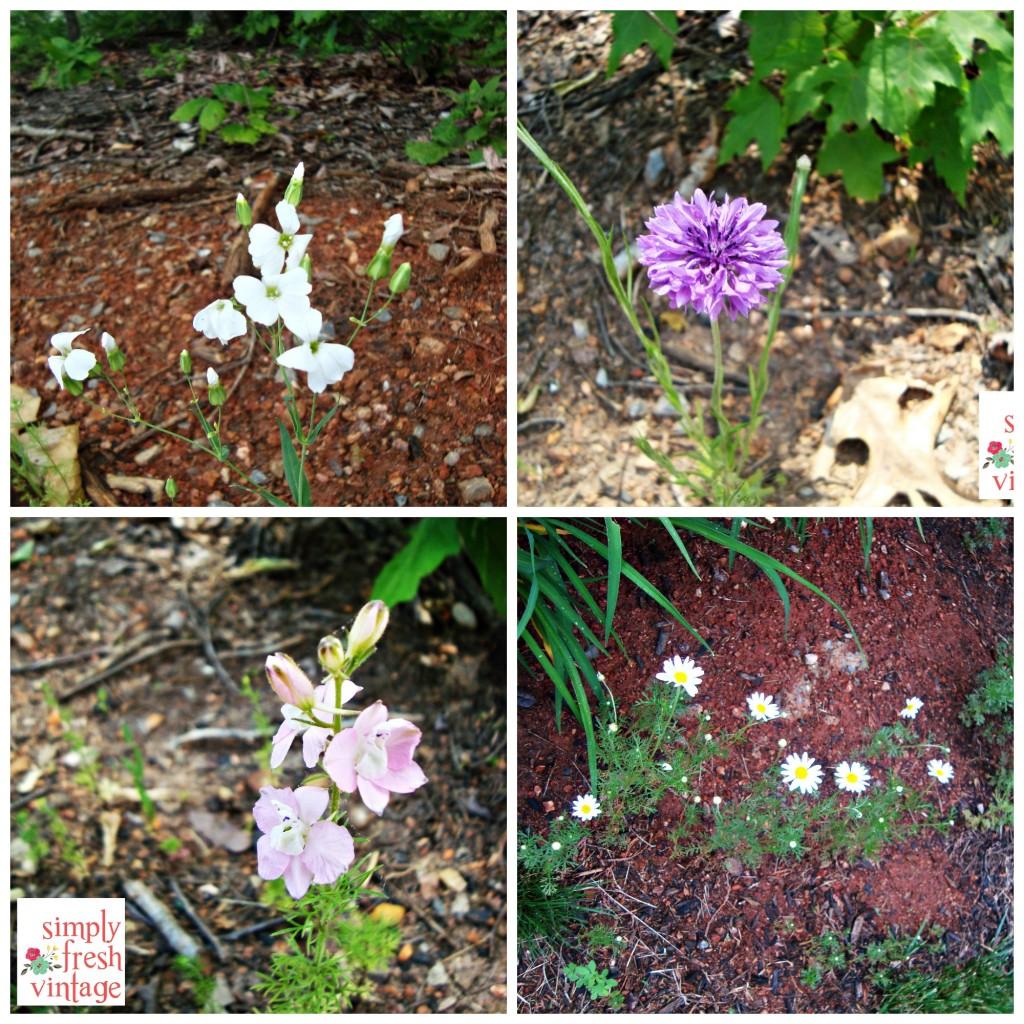 Wildflowers ... Simply Fresh Vintage