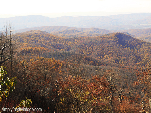 Every Fall, the landscape of the Blue Ridge Parkway puts on its show, displaying a palette of glorious color designed and crafted by our Creator. | SimplyFreshVintage.com