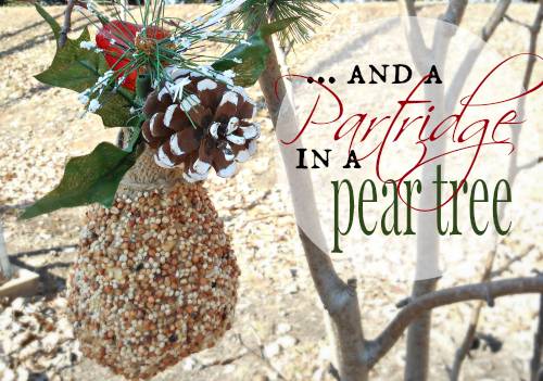 Partridge In A Pear Tree – An Easy Bird Feeder